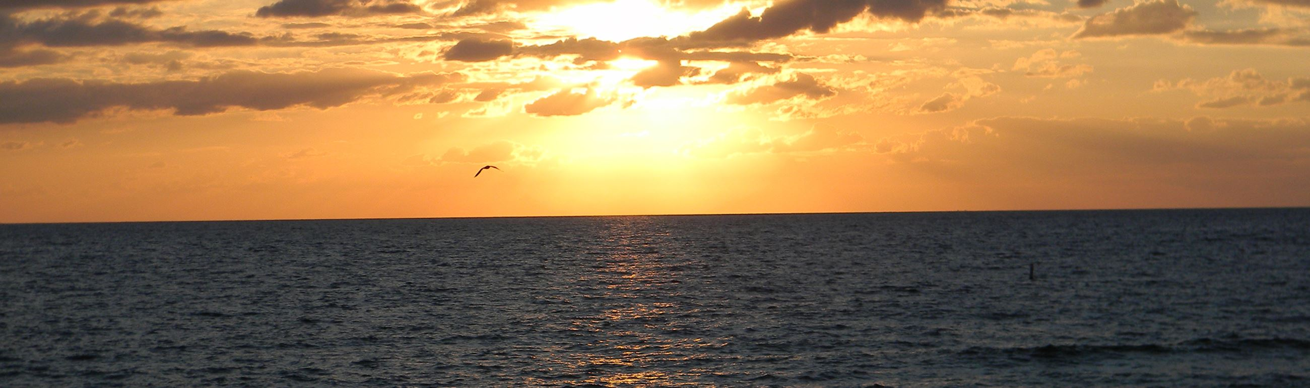 Sunrise and Seagull off Lauderdale-By-The-Sea
