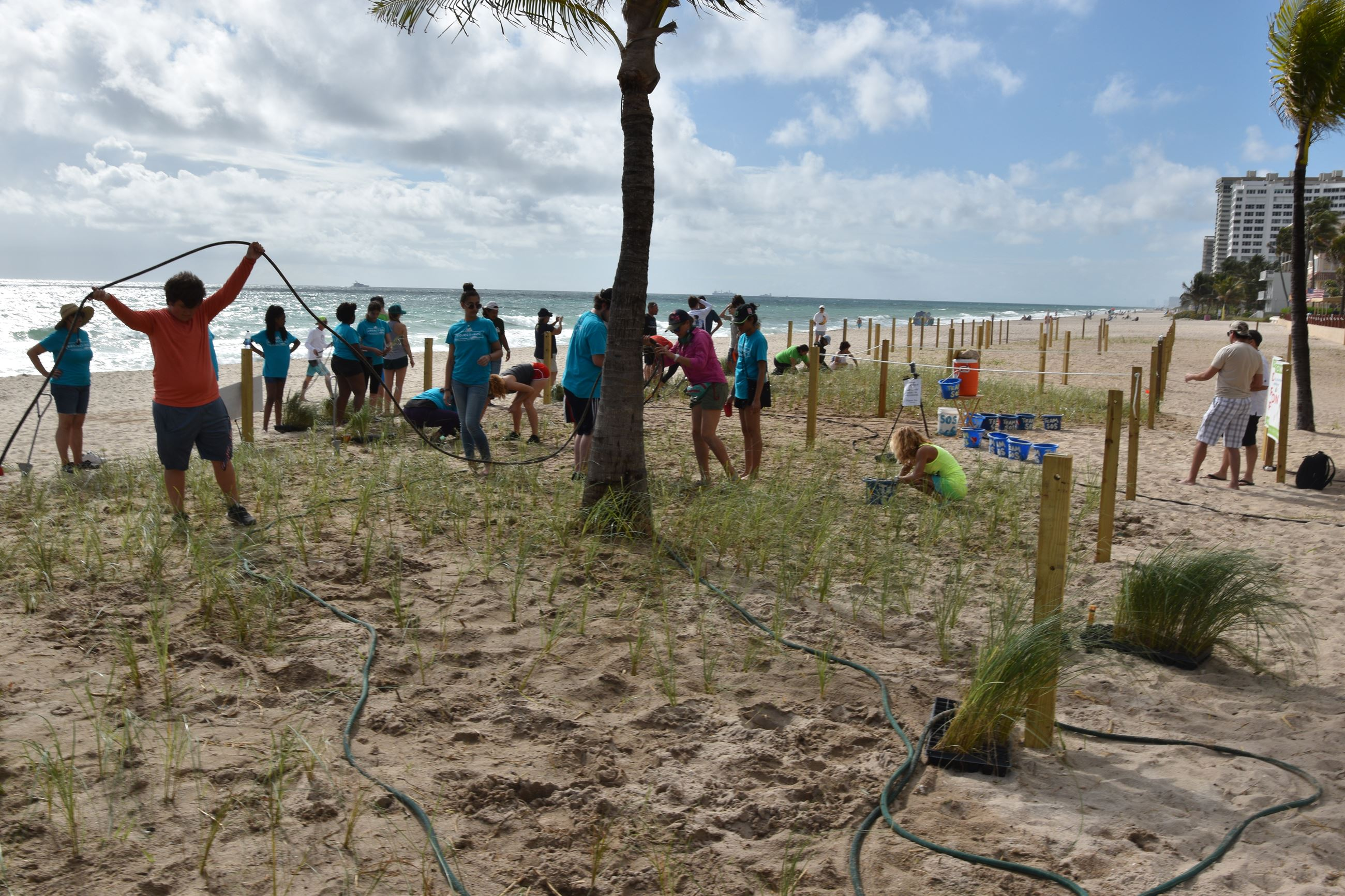 Photo of initial sea oats planting