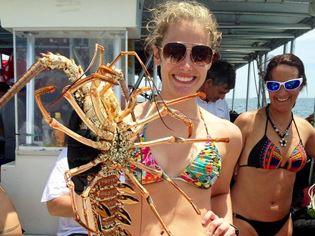 BugFest Diver Holding Spiny Lobster